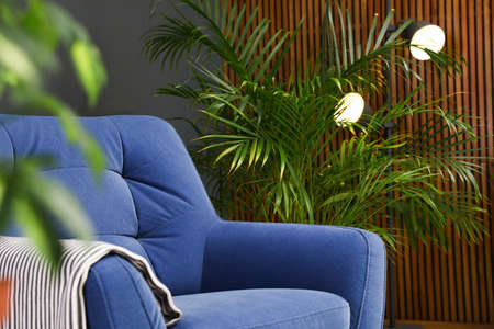 Indoor palm tree near armchair in room interior. Trendy plants for home