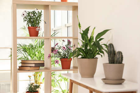 Shelving unit with plants indoors. Trendy home interior