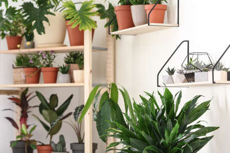 Different home plants in stylish room interior