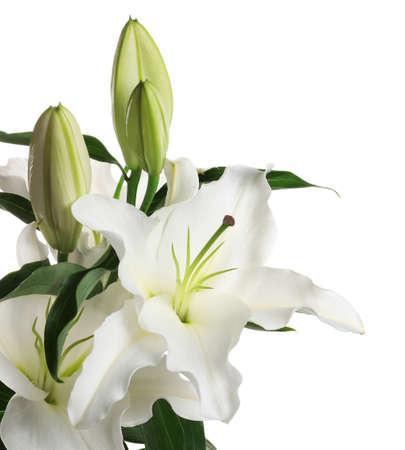 Schöne Lilien auf weißem Hintergrund. Begräbnisblumen