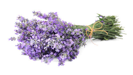 Beautiful tender lavender flowers on white background