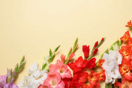 Flat lay composition with beautiful gladiolus flowers on yellow background. Space for text