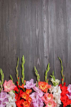 Flat lay composition with beautiful gladiolus flowers on dark wooden background. Space for text Stock fotó