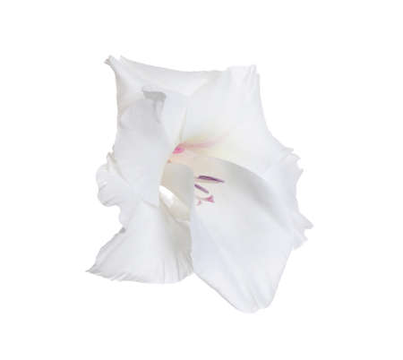 Beautiful delicate gladiolus flower on white background Stock fotó - 127817220