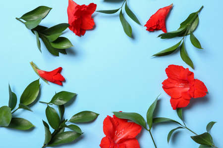 Flat lay composition with beautiful gladiolus flowers on blue background. Space for text