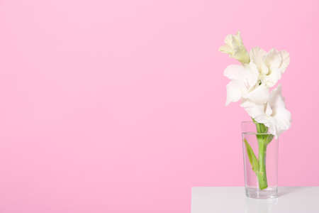Vase with beautiful gladiolus flowers on wooden table against pink background. Space for text