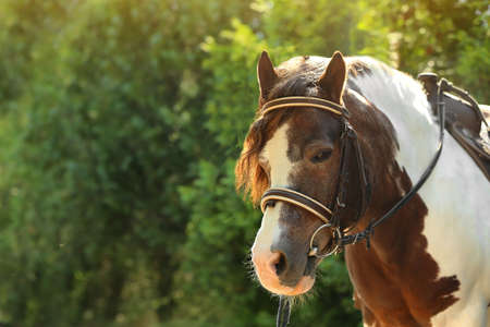 Cute pony with bridle in green park on sunny day Stock Photo