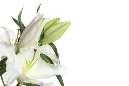 Beautiful lilies on white background, closeup view