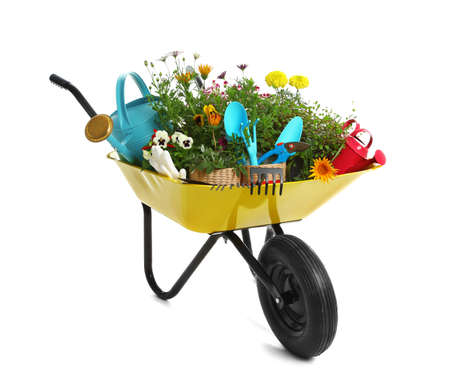 Wheelbarrow with flowers and gardening tools isolated on white background
