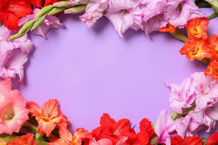 Flat lay composition with beautiful gladiolus flowers on violet background. Space for text Stock fotó