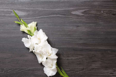 Beautiful white gladiolus flowers on dark wooden background, top view. Space for text Stock fotó