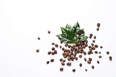 Fresh green coffee leaves and beans on white background, top view 스톡 콘텐츠