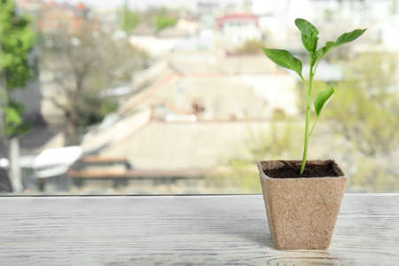 Vegetable seedling in peat pot on window sill, space for text Фото со стока