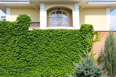 Fence covered with green ivy in garden near modern house Stockfoto - 128609261