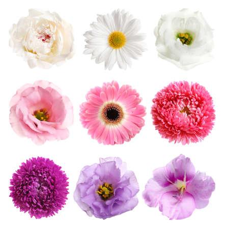 Ensemble de différentes belles fleurs sur fond blanc Banque d'images
