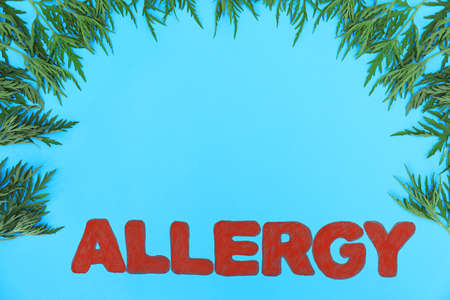 Ragweed (Ambrosia) and word ALLERGY on blue background, flat lay. Space for text