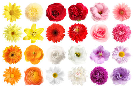 Set of different beautiful flowers on white background