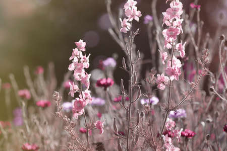 Beautiful blooming wild flowers in meadow, color tone Reklamní fotografie