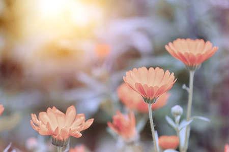 Beautiful blooming flowers in meadow, color tone