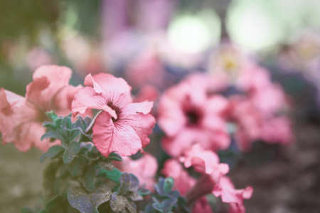 Beautiful blooming flowers in garden, color tone Reklamní fotografie