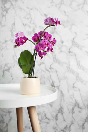 Beautiful tropical orchid flower on wooden table against grey and marble background