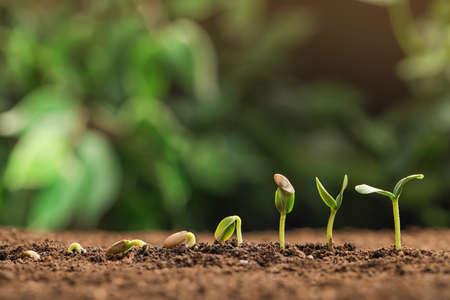 Pequeñas plántulas verdes que crecen en suelo fértil contra el fondo borroso. Espacio para texto