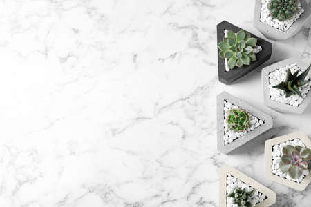 Beautiful succulent plants in stylish flowerpots on marble background, flat lay with space for text. Home decor