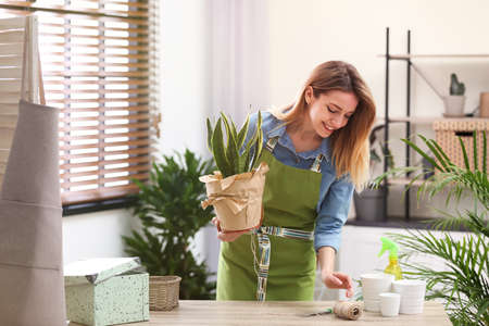 Young woman taking care of houseplant indoors. Interior element