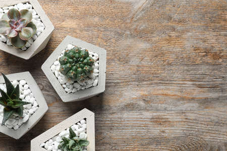 Beautiful succulent plants in stylish flowerpots on wooden background, flat lay with space for text. Home decor