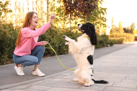 Young woman playing with English Springer Spaniel dog outdoors 写真素材