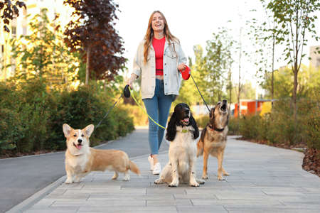 Young woman walking adorable dogs in park