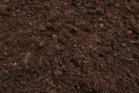 Fresh soil for gardening as background, closeup
