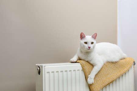 Cute white cat on heating radiator with plaid near light wall Stock Photo