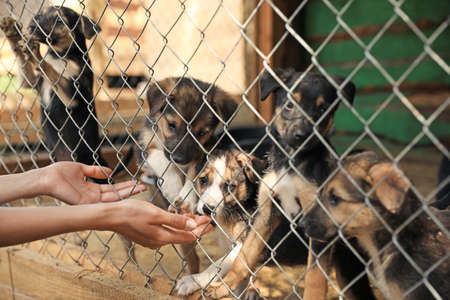 Woman near cage with homeless dogs in animal shelter, closeup. Concept of volunteering Banco de Imagens