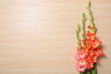 Flat lay composition with beautiful gladiolus flowers on wooden background. Space for text
