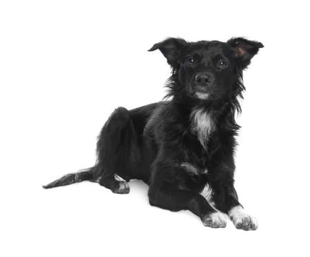 Cute long haired dog on white background