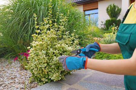 Woman trimming plant outdoors, closeup. Home gardening Stockfoto