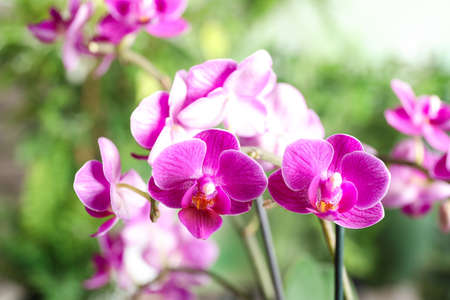 Beautiful blooming orchid on blurred background, closeup view 写真素材