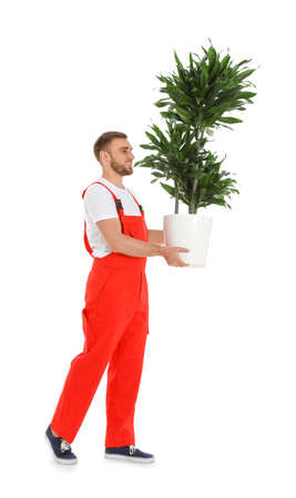 Young worker carrying potted plant isolated on white. Moving service