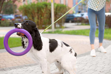 Woman playing with her English Springer Spaniel dog outdoors