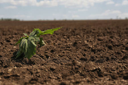 View of fertile ground surface with plant on sunny day Stock fotó