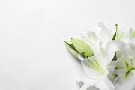 Beautiful lilies on white background, top view 写真素材