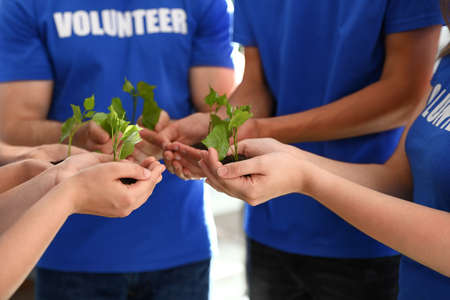 Group of volunteers holding soil with sprouts in hands outdoors, closeup