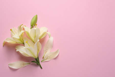 Beautiful lilies on pink background, flat lay. Space for text