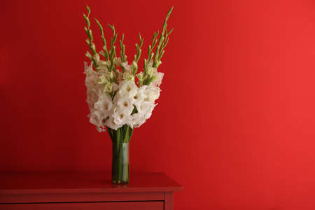 Vase with beautiful white gladiolus flowers on wooden table against red background, space for text