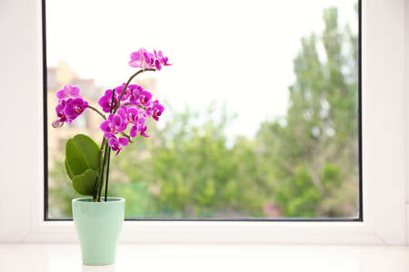 Flowerpot with blooming orchid on windowsill indoors, space for text