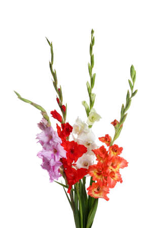 Beautiful bouquet of gladiolus flowers on white background