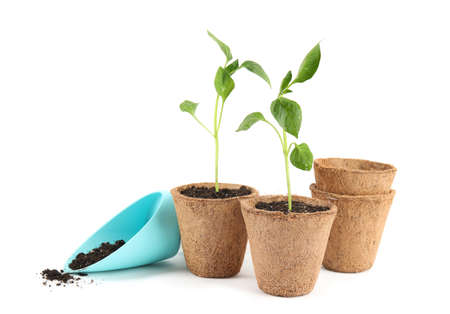 Vegetable seedlings in peat pots and plastic scoop with soil isolated on white