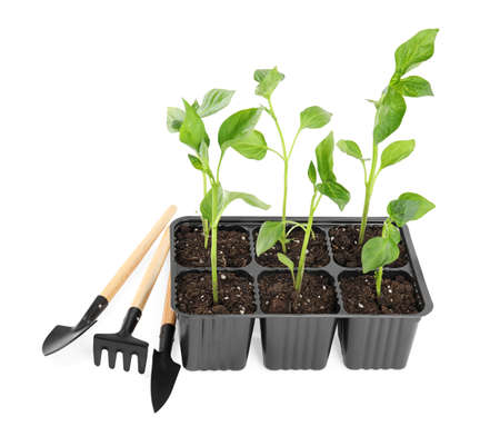 Vegetable seedlings and garden tools isolated on white Stock fotó