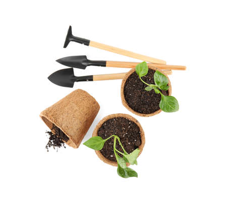 Vegetable seedlings and garden tools isolated on white, top view